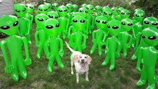 Dog vs Alien Apocalypse Prank! Funny Dogs Maymo & Potpie Battle Epic Aliens Prank
