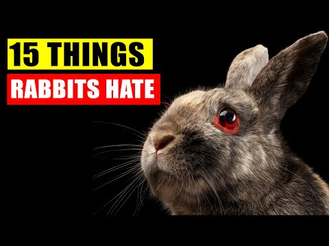 , title : '15 Things Rabbits Hate the Most