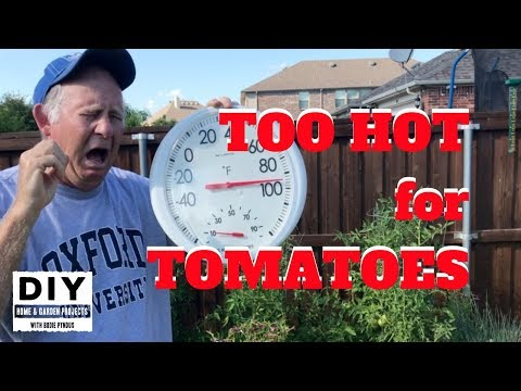 , title : 'Too HOT for TOMATOES?