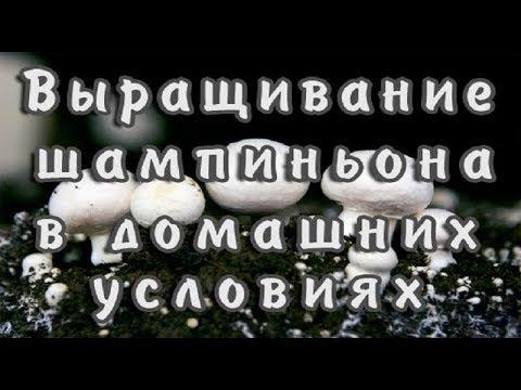 Гепатиту нет украина