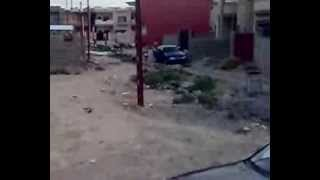 preview picture of video 'الكلاب السائبة في برطلة'