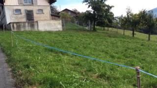スイス発 牛が逃げないように!放牧地にある電流線【スイス情報.com】