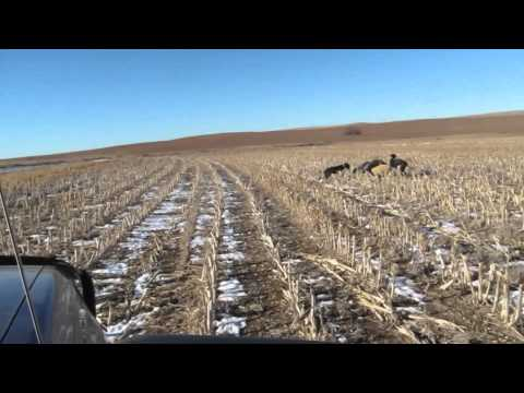 KS Coyote Hunt