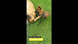 Rina – Video natečaj 2020 – Revija Moj Pes #Rina #MojPes