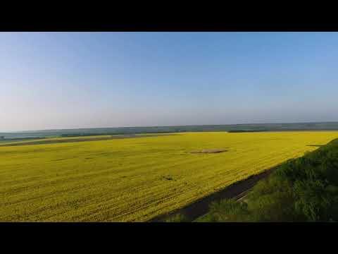 Достопримечательности Михайловска | Рапсовые поля | Жилой район Гармония