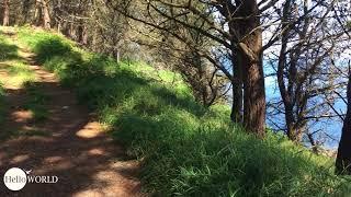 Toller Weg durch den Kiefernwald
