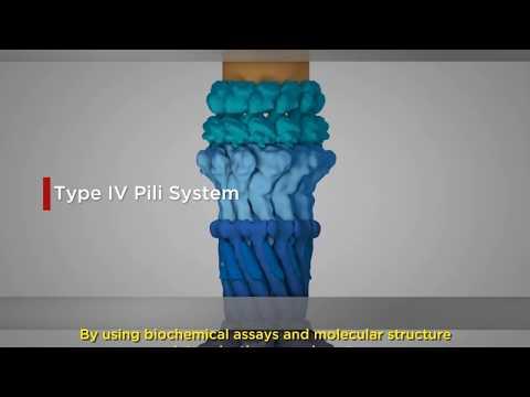Was sind die weißen Blutkörperchen in Prostatasekret