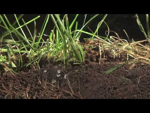 Les parasites est absents les semences de la courge
