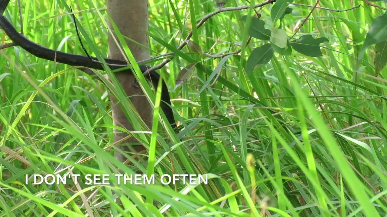 Beautiful common tree snake
