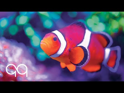 Soothing Ambient Music & Aquarium Sounds | Underwater Background