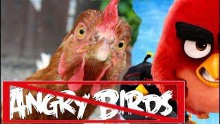 Не злые птицы ЗНАКОМЬТЕСЬ-НАШИ КУРЫ!!! NOT ANGRY BIRDS. MEET OUR CHICKENS !!!