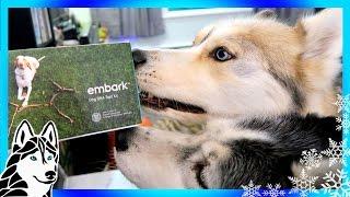 HUSKY OR MALAMUTE   Dog DNA Test Embark