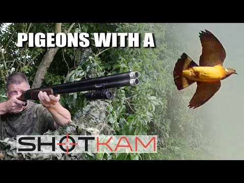 Pigeons with a ShotKam