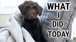 A DAY IN THE LIFE OF WATSON🐶CHOCOLATE LABRADOODLE PUPPY DAY IN THE LIFE‼️