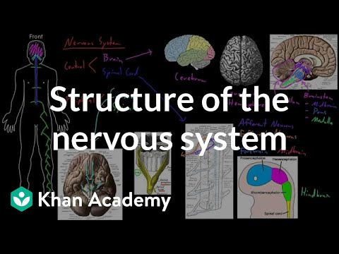 Structure of the nervous system (video) | Khan Academy