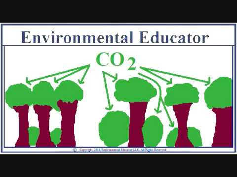 Natural CO2 sinks - CO2 2/7