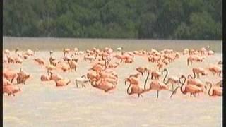 preview picture of video 'Lagune Celestun'