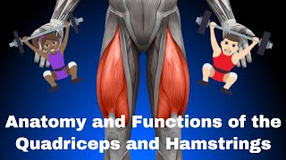 Anatomy and Functions of the Quadriceps Femorii and Hamstrings