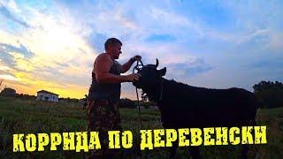 Деревенские будни - Встречаем коров. Телка убежала / Семья в деревне
