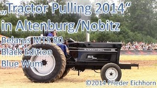 preview picture of video 'Tractor Pulling 2014, Belarus MTS 80, Black Edition & Blue Wum, die Powerpakete'