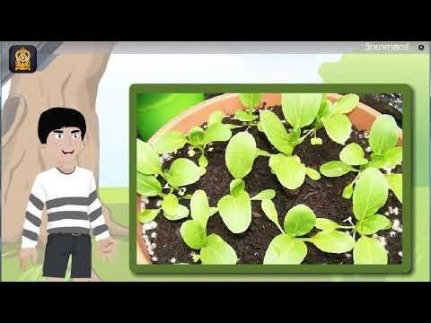 รากวัชพืชกาฝาก