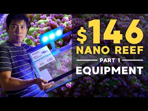 $146 Nano Reef: Equipment You Need (Part 1)