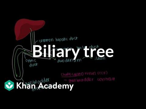 Biliary tree (video) | Organ systems | Khan Academy