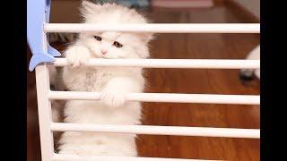 奶猫们断奶第一天,为了找妈妈想尽办法越狱,最胖的那只频频失败