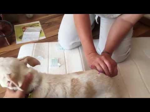 Akupunktur für Hund