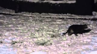 Katze Mimi – Erster Schnee am frühen Morgen