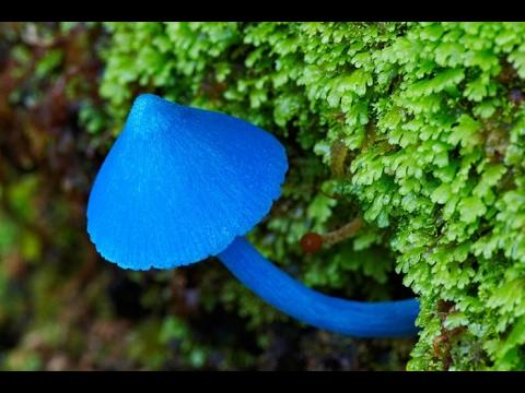 Назовите грибы паразиты растений