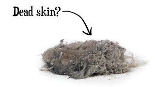 Is Dust Mostly Dead Skin?