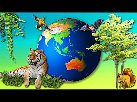 Растительный и животный мир Земли География 7 класс
