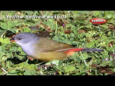 , title : 'vWaxwing, Weaver Bird, woodpecker & Wren birds     Classification of birds    Learn About Birds