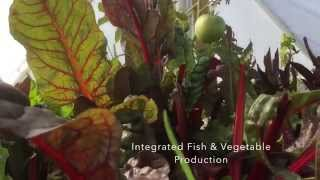 preview picture of video 'Florence Complex Micro AquaBioPonics System in Action'