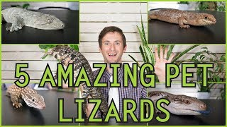Five of the Best Pet Lizards You Could Possibly Get!