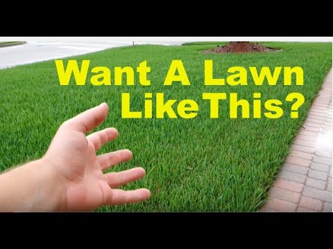 How To Fix An Ugly Lawn   Lawn Care Tips For Beginners