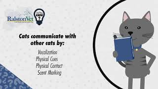 Cat Fact: Adult Cats Only Meow At Humans!
