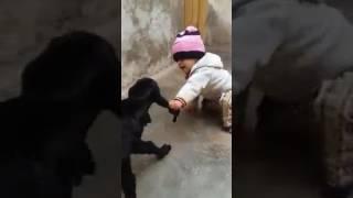 Hhhhhhh comidi videos