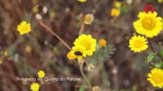 Primavera na Quinta do Palame