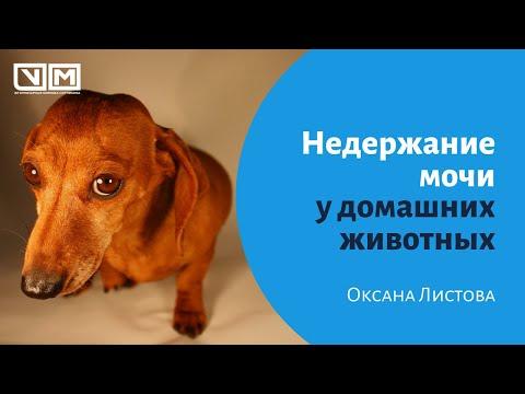 Недержание мочи у домашних животных.
