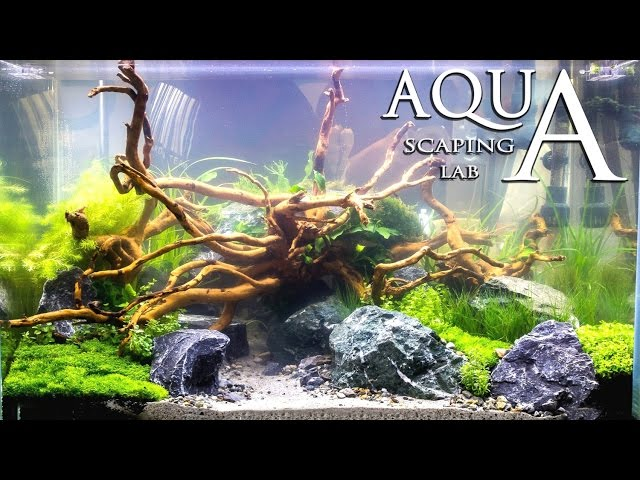 Aquascaping Contest Show Petsfestival Aquarium set 2015 by Aquascaping Lab PARTE 4