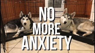 Crate Training A Dog With Separation Anxiety - Siberian Husky Training