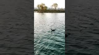 Lake & bird + train #shorts #fpv #gopro #drone