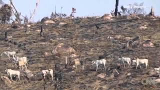 CNN Explains  Deforestation