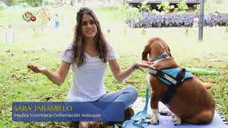 TV MUNICIPIOS – LA ALCALDÍA DE VEGACHÍ – ANTIOQUIA BUSCA MEJORAR CONDICIONES DE VIDA DE SUS HABITANTES CON LOS ANIMALES