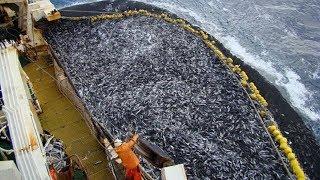 Amazing Big Catch Fishing Skill, Net Fishing In The Sea