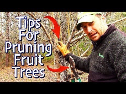 Fruit Tree Winter Pruning and Training - YouTube