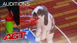 Bini The Bunny Performs EPIC Stunts on AGT - America's Got Talent 2021 thumbnail