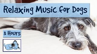 3 Hours of Relaxation Music for Dogs, Calm Them During Firework Displays and Thunderstorms!